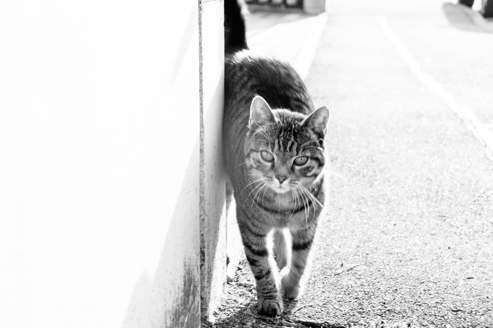 Fotografie Katze | Julia Friedl