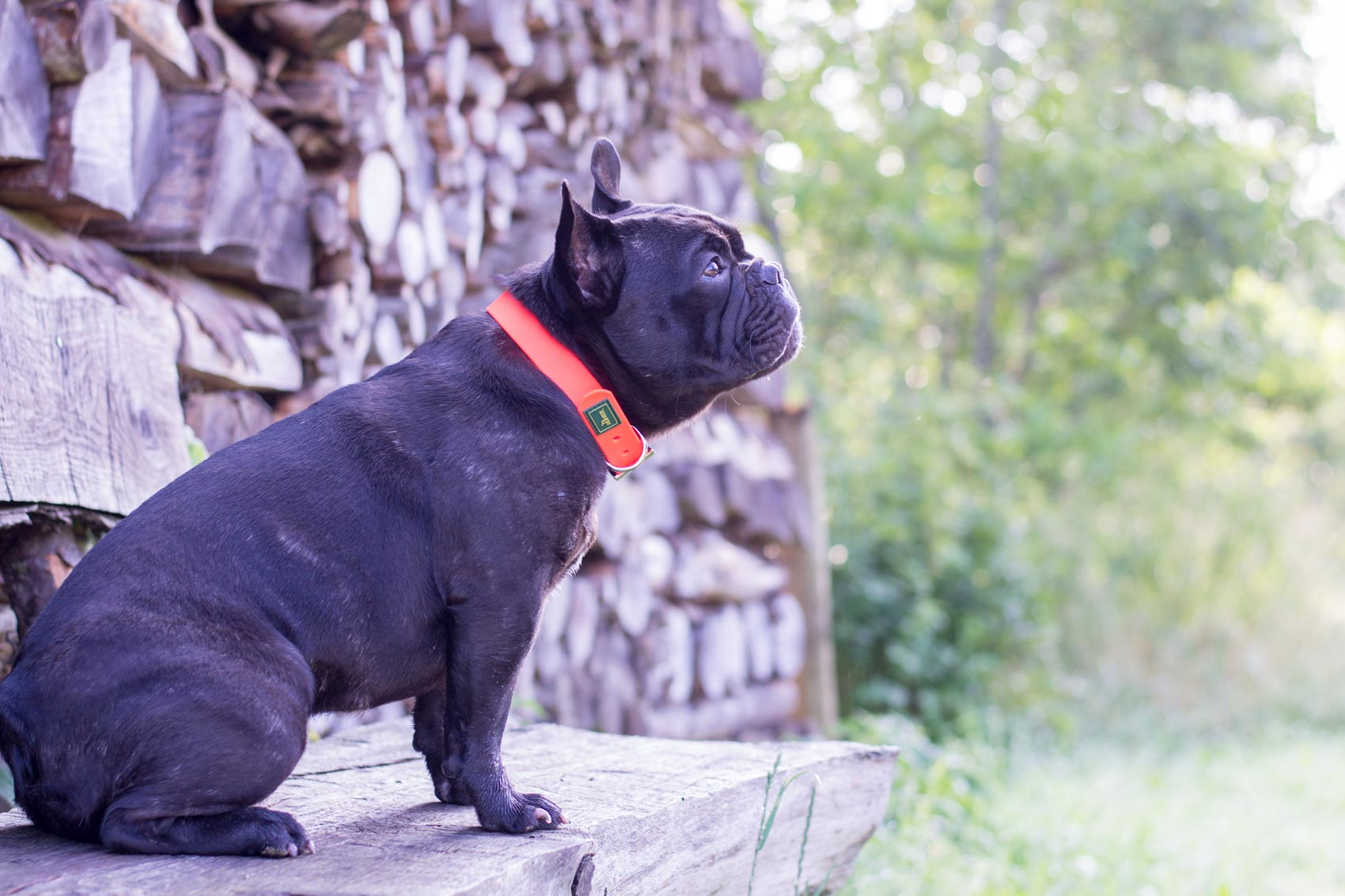 Fotografie Französische Bulldogge   Julia Friedl