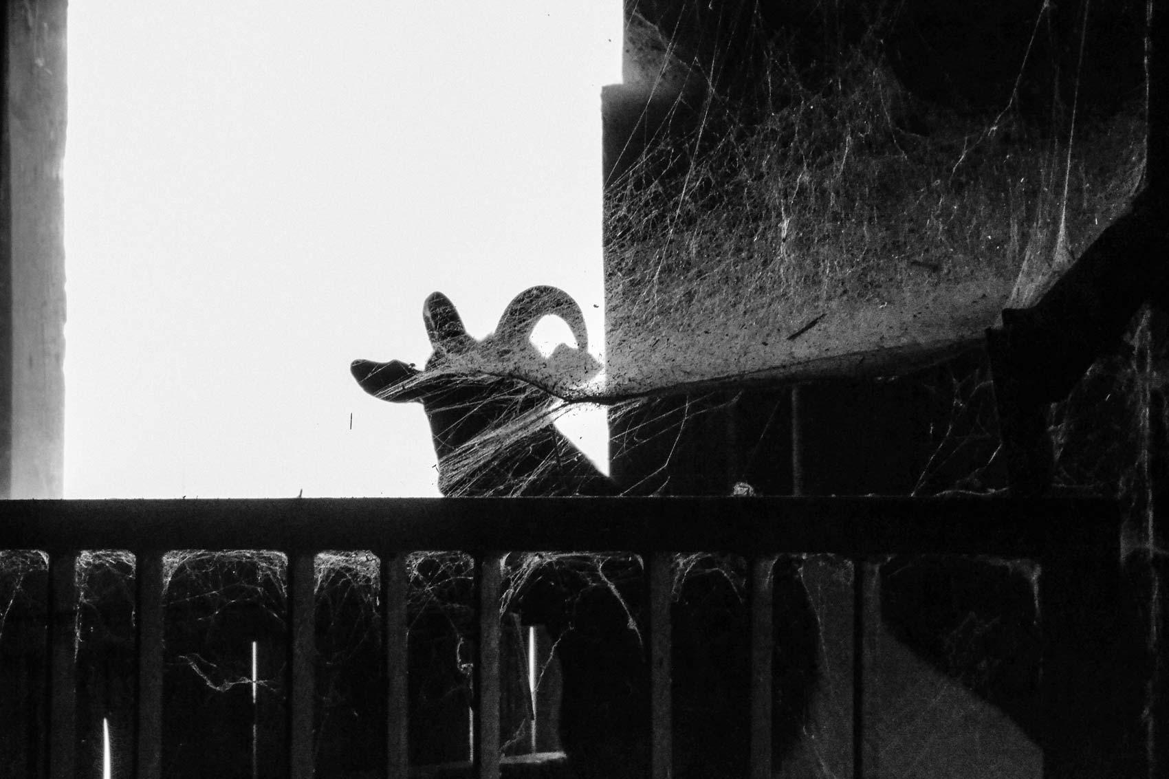 Fotografie Tiere | Julia Friedl