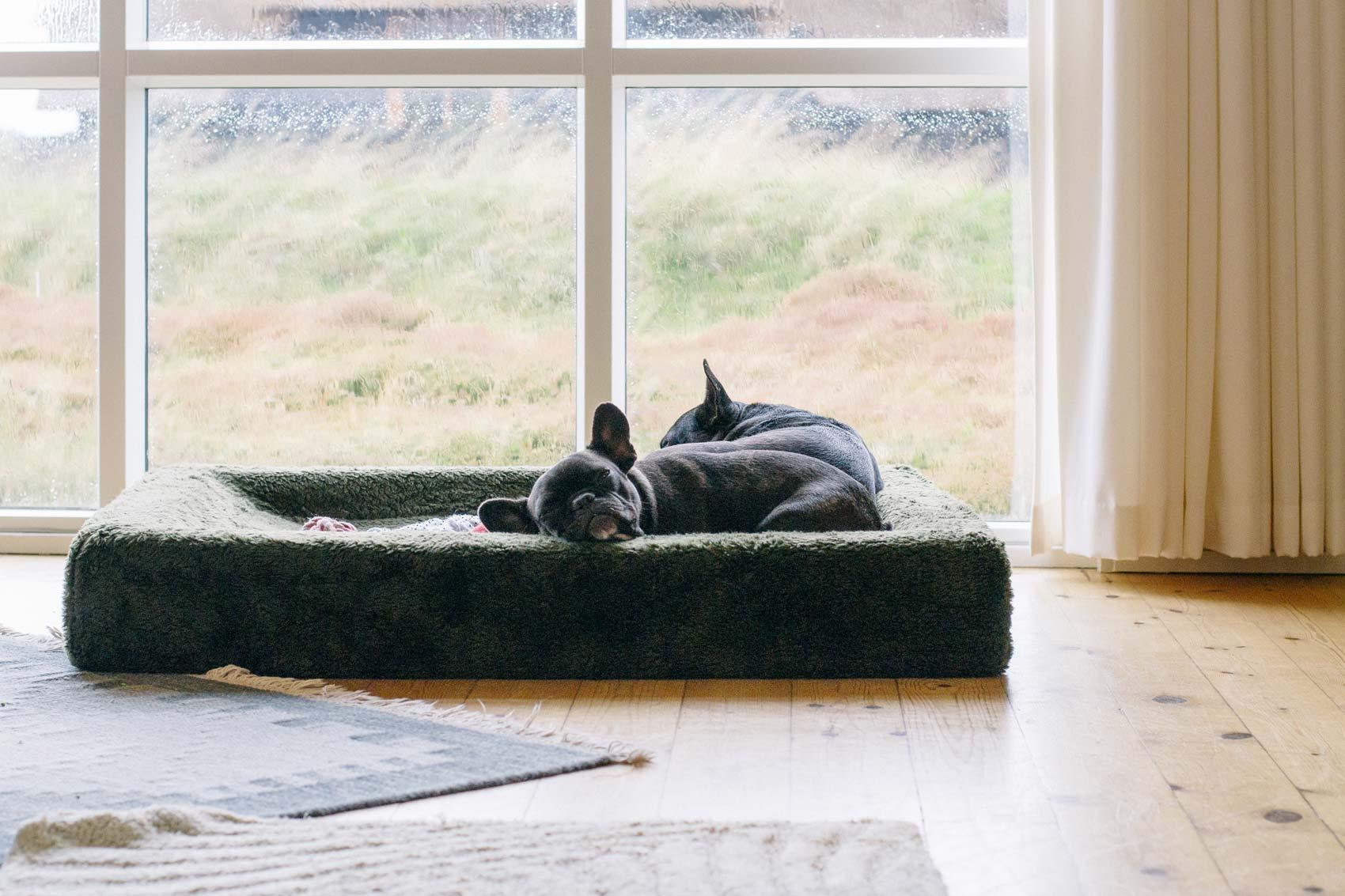 Fotografie Französische Bulldoggen | Julia Friedl