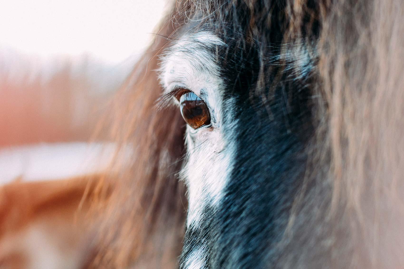 Detail-Fotografie Auge Islandpferd | Julia Friedl