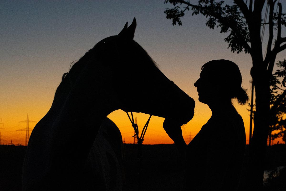 Pferdefotografie Sonnenuntergang