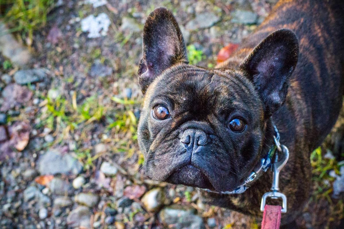 Fotografie Hunde | Julia Friedl