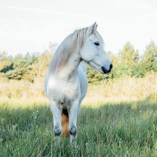 Pferdefotografie | Julia Friedl